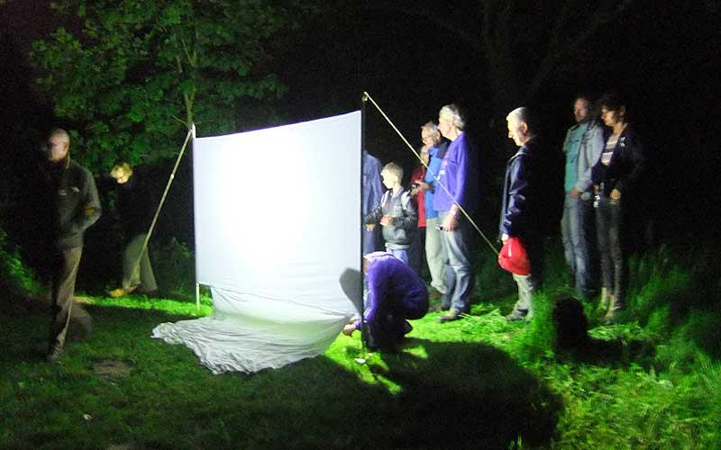 Nachtvlinders waarnemen tijdens de Nationale Nachtvlinder Nacht